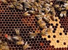 Bees to help dispel wild elephants