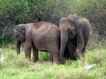 Govt. to turn rebel hideout into wildlife sanctuary