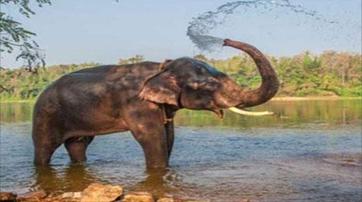 Myanmar gifts young tusker to Sri Lanka