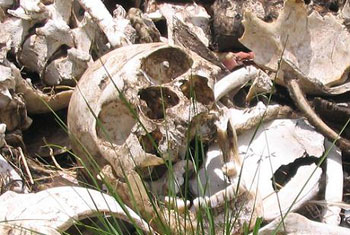 136 skulls dug up from Matale mass grave