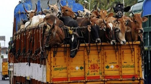 President halts issuing of licenses for cattle transport