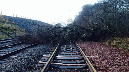 Fallen tree disrupts trains on Kelani Valley line