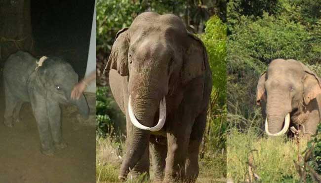 CID to probe recent tusker killings
