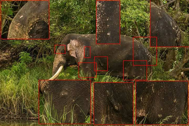 Did tusker 'Mahasen' suffer same fate as 'Dala Puttuwa'?