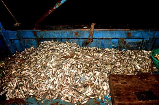 Seven Indian fishermen arrested in Sri Lankan waters