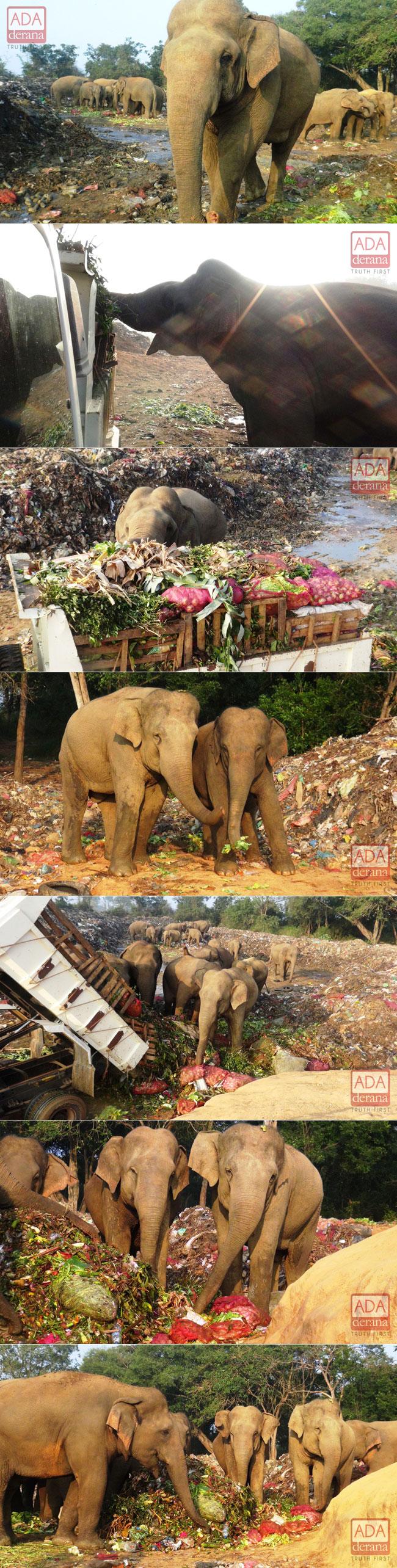 A treat for elephants...