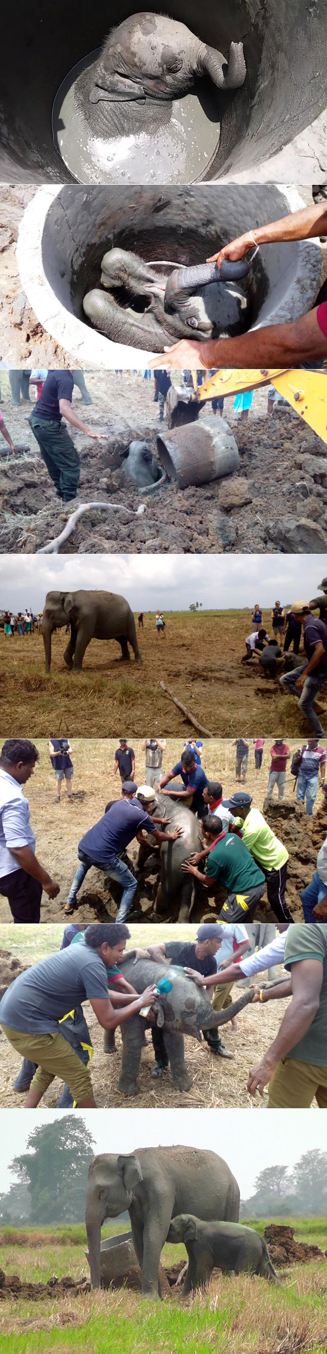 Elephant rescue operation...