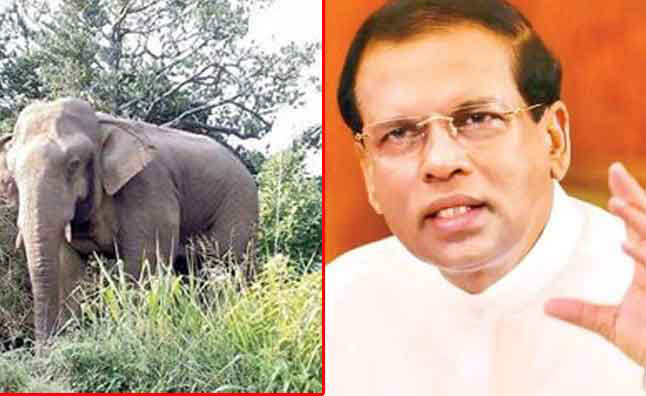 President orders not to relocate the two elephants at Sinharaja