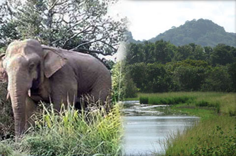 Sinharaja elephants to be transferred to protection center