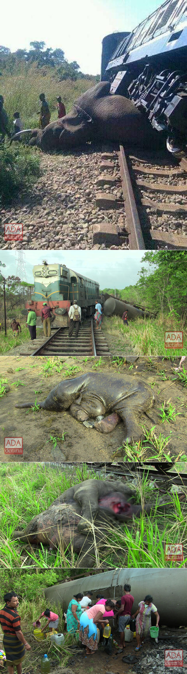Three elephants killed by train in Habarana