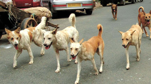 Owners of stray dogs face Rs 25,000 fine and 2 years imprisonment