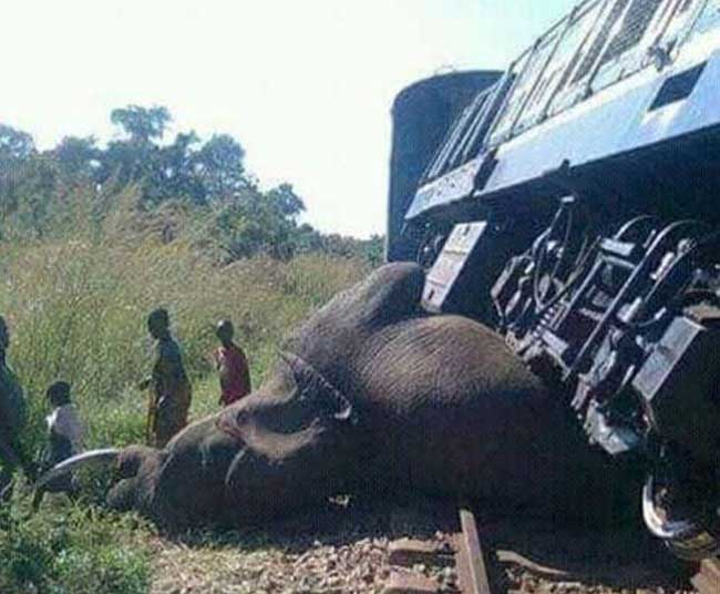Sri Lanka to implement measures to prevent elephant-train collisions
