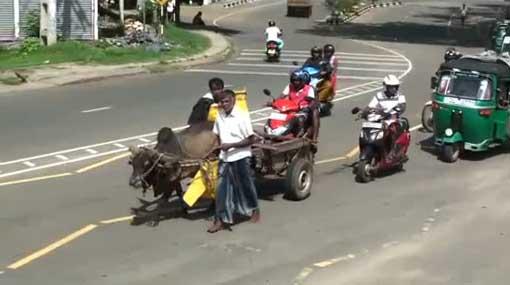 SLPP members ride bullock cart in protest