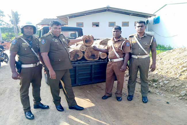 Person arrested with Rs 500,000 worth Teak logs