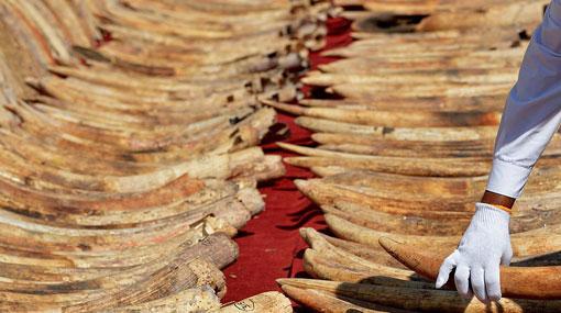 Sri Lanka to host meeting to highlight global threat to wild animals, plants