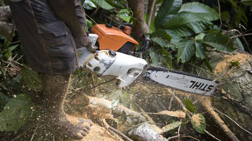 Register all chainsaws before February 28 – Defence Ministry