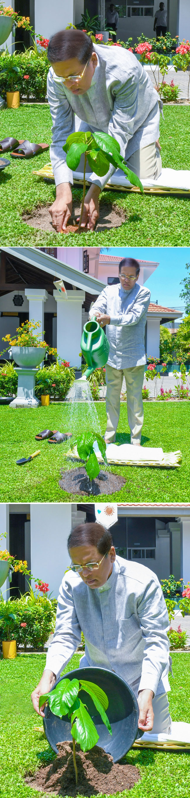 Tree planting custom for Avurudu...