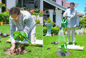 Tree planting custom for Avurudu...