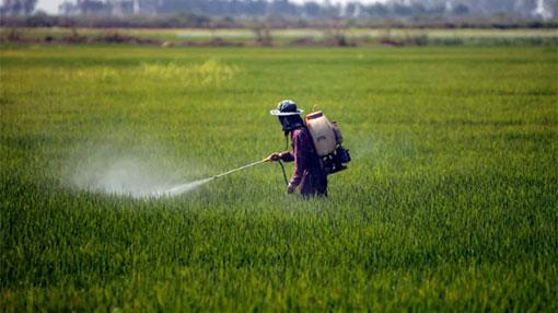Glyphosate under fire from San Francisco to Sri Lanka