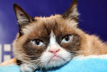 Grumpy Cat, the internet legend dies