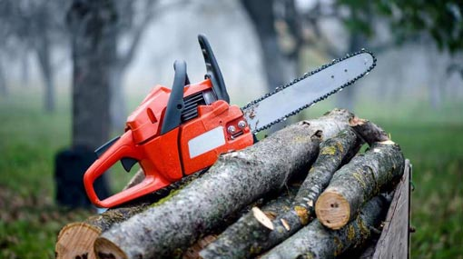 Cabinet approves President's proposal to ban chainsaws