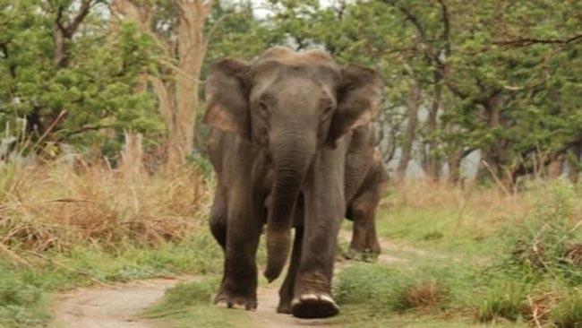 Elephant attacks illegal gem miner fleeing arrest
