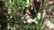 Skeletal remains of 2 mystery deaths found in Habarana reserve