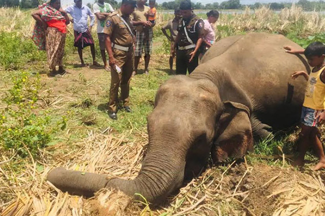 Cause of death of seven female elephants revealed