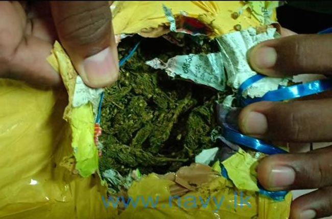 Navy nabs man with Kerala cannabis in Jaffna