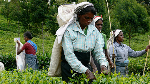 Rs 1,000 daily wage for estate workers from March 1