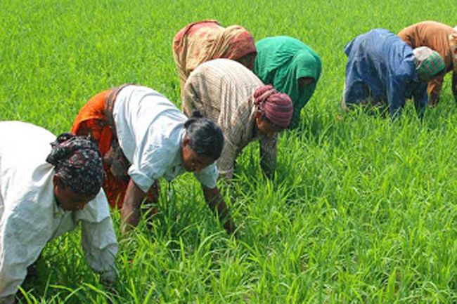 Cabinet approves distribution of free eco-friendly fertilizer for farmers