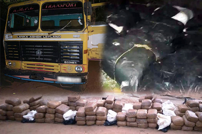 Army arrests man transporting 323kg of Kerala Cannabis