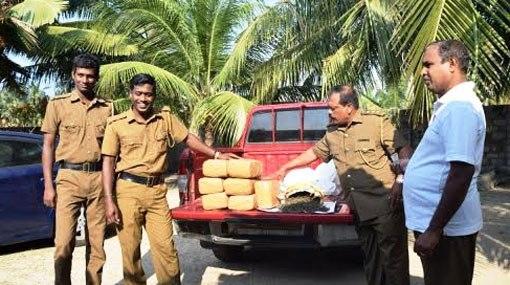 17 kg of Kerala ganja seized in Mannar