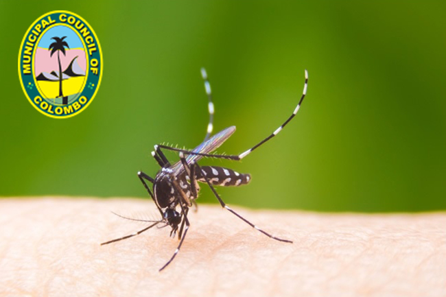 CMC to launch four-day dengue prevention program from today