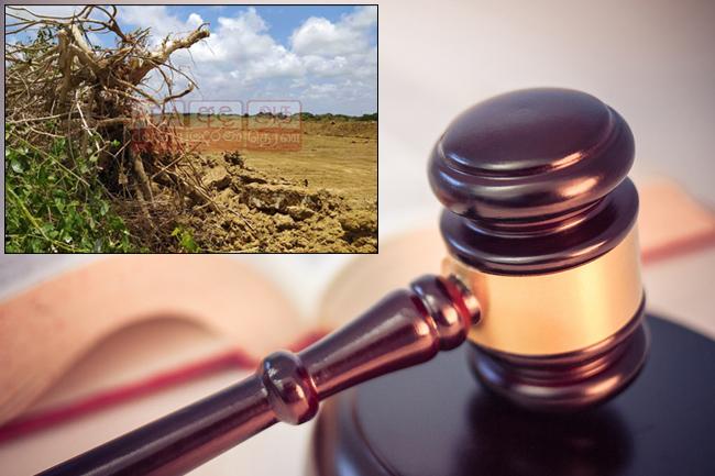 Anawilundawa Wetland clearing: Businessman, backhoe driver granted bail