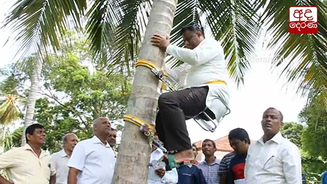 State Minister climbs coconut tree