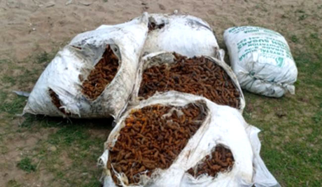 Over 1,000 kg of smuggled turmeric recovered