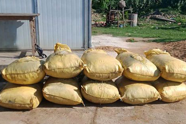 Two arrested in Mannar with smuggled turmeric & cannabis haul