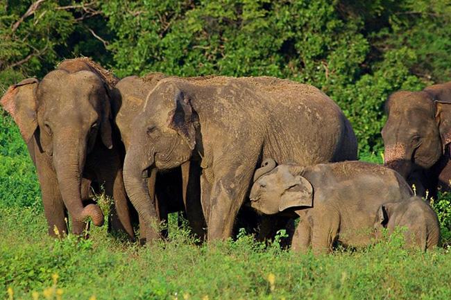 Cabinet nod to gazette Wild Elephant Management Reserve
