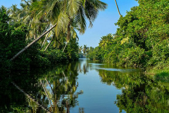 Muthurajawela Wetlands brought under Environment Ministry and UDA