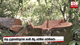 Large-scale timber racket busted