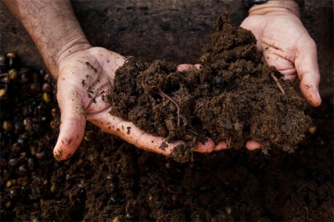 Govt. to offer Rs. 10,000 per hectare for farmers producing organic  fertilizer