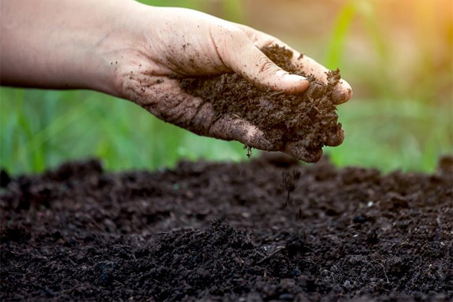 Govt. temporarily halts importation of compost
