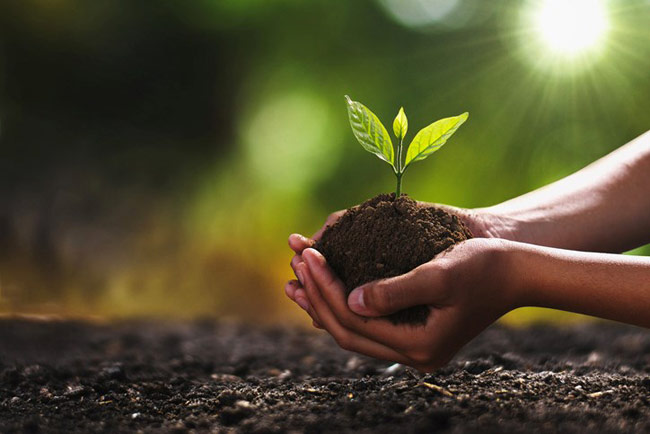 Govt. says no plan to change decision on use of organic fertilizer