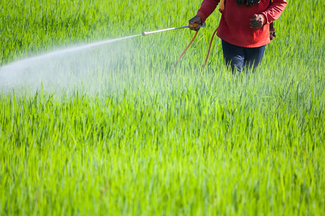 Govt says policy to ban use of chemical fertilizers remains unchanged