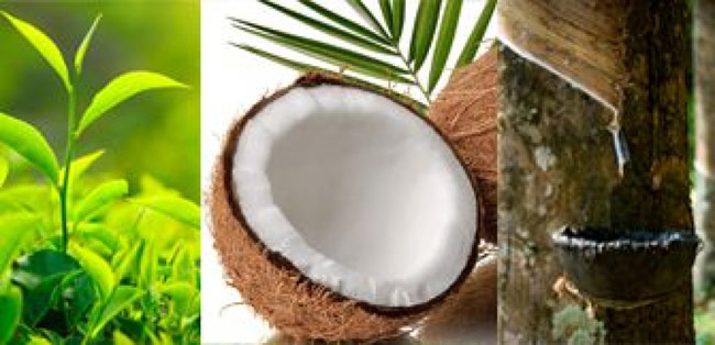 Importation of organic fertilizer for tea, coconut, rubber permitted